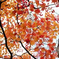 夕張の紅葉