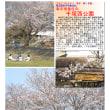 花巡り 「桜-その404」 千塚西公園 幸手市香日向
