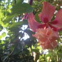 秋晴れの植物園