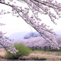 千本桜 さざえ堂 埼玉県本庄市児玉町