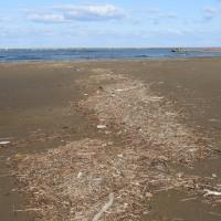 柏崎海岸 漂着ゴミ