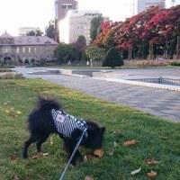 ツバサ日記(午後のお散歩『大通公園』)