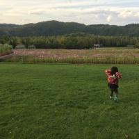 娘とコスモス畑へ