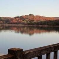 朝の散歩道 落ち葉のじゅうたん