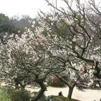 中山寺の梅林