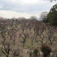 大阪城の梅