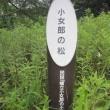 ⑬-3 天橋立絶景ウォーク(3)