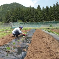 今日は、胡瓜の植え付け!!