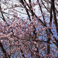 2017/05 信州DC in Spring №4 (その3) 戸隠奥社から鏡池へ
