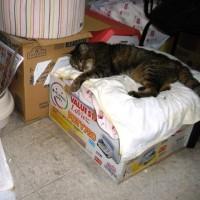 寝場所から落ちる猫
