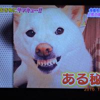 10/20 歯をむき出している犬や
