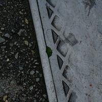 Leaf vein 390