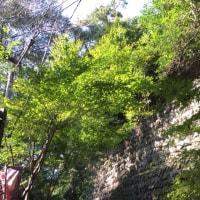 深大寺とプチプラ化粧水