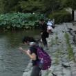 鎌倉鶴岡八幡宮・ハト