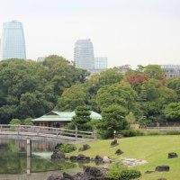 東京都中央区の東京都立浜離宮恩賜庭園では、コスモスの花は終焉を迎えています