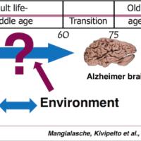 大規模調査で見えたアルツハイマー病予防のヒント。