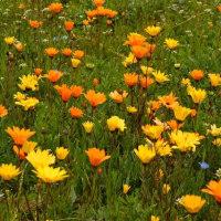 下田港と松崎の花畑