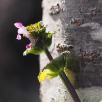 春の野の惹かれる花に変わりなし