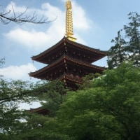 高幡不動さんのあじさい祭りと蓮花寺の吉宗くん