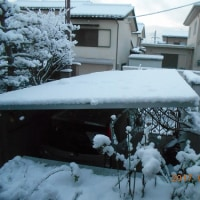 今日も雪景色