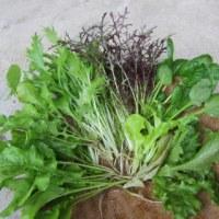 無農薬・無化学肥料野菜