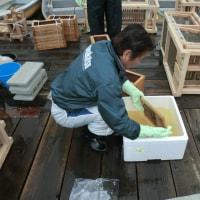 【2014】円良田湖(寄居町) 網走産ワカサギ卵を追加で1千万粒放流!!