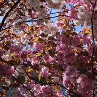 つれづれなるままに  2451  5月末の花