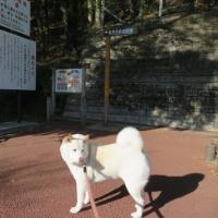 群馬県みどり市、新緑とコバルトブルーの高津戸峡を愛ちゃんと散歩したよ♪