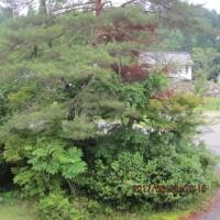 空梅雨為るも湿度高め・・・ブログ更新しました!