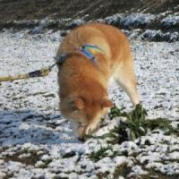 大雪予報の日のムチャのひとりごと。