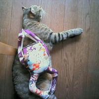 カエルの鞄をしょったネコ