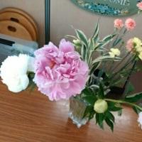 6月1回目の花