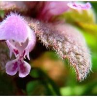 草花とヒュウガミズキ。     17・2月23日
