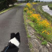 今日のお散歩♪