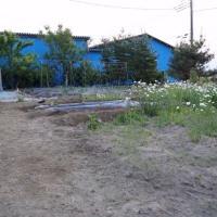 家庭菜園と草刈りの一日