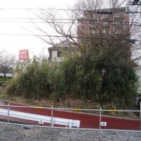 地域要望実現へ 増尾台と永楽台近隣公園通路の補修、寄せられた永楽台近隣公園の新緑
