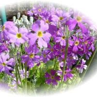 庭にも春が・・・