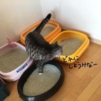 手つだってくれる猫