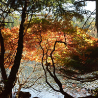2016/10 The 信州 in Autumn №10 ~白駒池を後に~