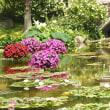 7/21 夏のお花が少なくて・・・プランターのお花に夏休みくださいね