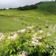 多くの花との出会いがあった唐松岳への登山:始まりはリフト乗り場から:オオバギボウシ・オニシモツケの花