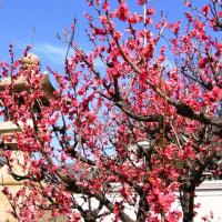 春暖への誘い-