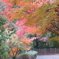 楽しい園芸 紅葉