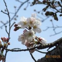 3月27日(月)の学習内容