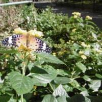 小さな蝶は