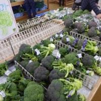 春野菜そろってます!