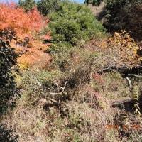 秋の六甲と谷川のセセラギ
