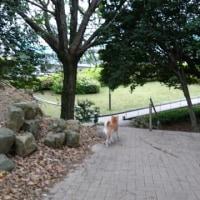 夕方散歩は勝山公園