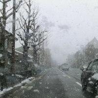 雪の金閣寺と美味しい鯖ずし・・・( ^ω^)・・・