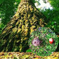 土の音…オカリナのある風景♪森のこもれびを浴びて